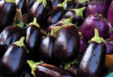 Dallas ISD Food Services Harvest of the Month - Eggplant